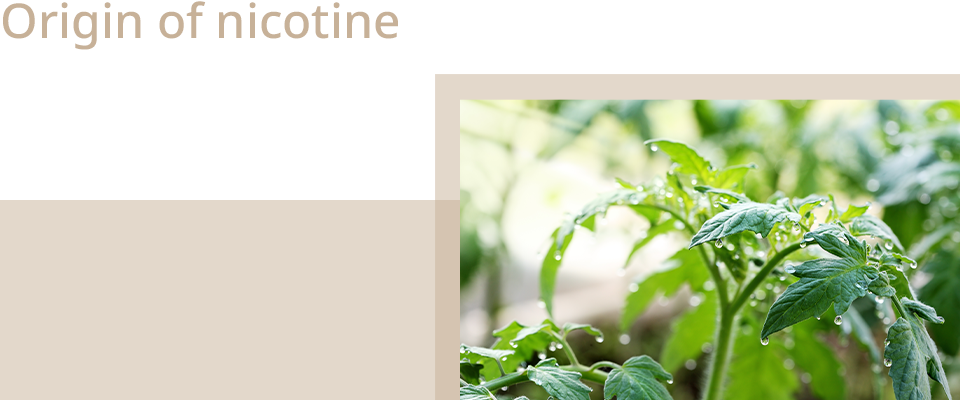 How is the nicotine produced, e-cigarette